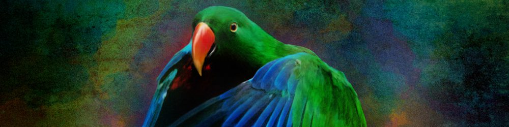 The Eclectus Parrot Blog